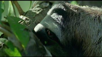 David Attenborough Says Boo To A Sloth Life Of Mammals BBC Earth